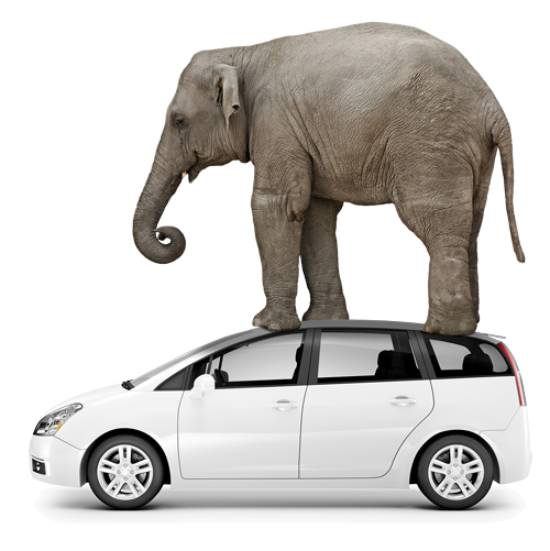 elephant standing on car